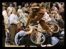 video Mascota Utah contra fans Cleveland